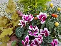 Petite Coupe de Plantes Vertes et Fleuries Colorées